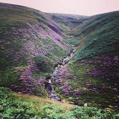 #blakeleyreservoir #marsden #huddersfield #westyorkshire #yorkshire #peakdistrictnationalpark #peakdistrict #pennines #moors #moor #hill #hills #nature #outdoors #thegreatoutdoors #walk #walking #heather #england #englishcountryside #nationalpark #park
