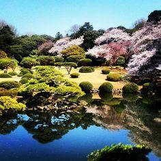 Japanese garden @ Shinjuku Gyoen, Tokyo