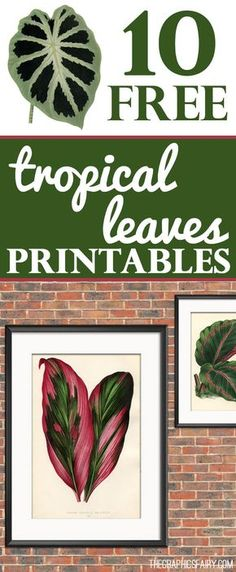 10 Free Tropical leaves Printables! Graphics Fairy. These are 10 coordinating Botanical Prints of Tropical Leaves. Perfect for your DIY Home Decor Projects. Just print and frame for some Instant Wall Decor!