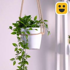 Blue Butterfly Discover DIY Plant Hanger Hang your plants like a macrame plant hanger. It ads a truly unique touch to your home. Here is a short tutorial on how to DIY Diy Crafts Hacks, Diy Home Crafts, Rope Crafts, House Plants Decor, Plant Decor, Home Plants, Hanging Plants, Plants Indoor, Hanging Herb Gardens