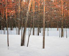 Winter Sunset Oil on Canvas, 2011 « Peter Rotter Contemporary Landscape, Landscape Art, Landscape Paintings, Landscapes, Winter Landscape, T Art, Art For Art Sake, Seascape Art, Bare Tree