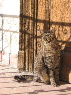 My cat in Jozephtown, Budapest