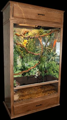 reptile terrariums - Google Search