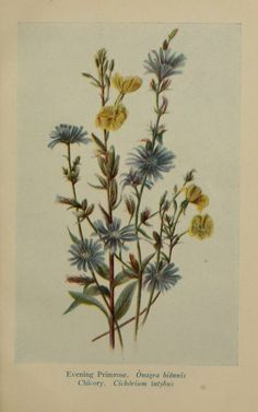 The wayside flowers of summer; - Biodiversity Heritage Library