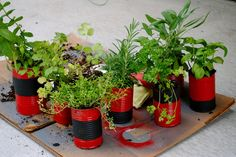 Living on Love: DIY: Vegetable Can Herb Garden