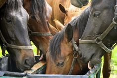 De voeding van je paard bestaat maar voor een heel klein deeltje uit mineralen, maar toch zijn ze enorm belangrijk voor je paard. Zonder mineralen kan een paard geen vetten, eiwitten of koolhydraten opnemen, zouden hun spieren en zenuwen niet normaal kunnen functioneren en zouden de botten het gewicht van je paard niet kunnen dragen.