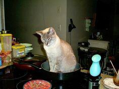 Sometimes we like roasted cat!