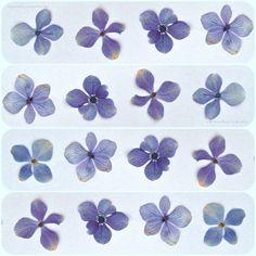 forget me nots- flower press
