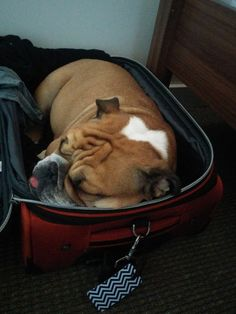 She's your trusty travel buddy… | 21 Reasons You Should Be Thankful For Your Dog