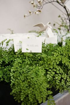 Maiden hair fern escort card holders by Mindy Rice