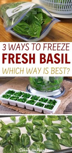 Basil is easy to grow in the backyard vegetable garden. It's also very easy to preserve. We put 3 popular ways of freezing fresh basil to the test to see which way gave the best results. Learn how to freeze fresh basil and use frozen basil for pasta sauce, soups, and more in this step by step guide. Freezing Cilantro, Freezing Basil, How To Make Pesto, How To Freeze Basil, Preserving Basil, Dried Basil Leaves, No Cook Meals, Freezer Meals, Cooking Instructions