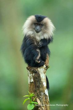 Smart Animals, Cute Animals, Beautiful Creatures, Animals Beautiful, Monkey Kingdom, Los Primates, Types Of Monkeys, Monkey Forest, Orangutans