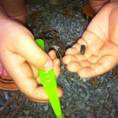 Science Outdoor fun with Pill Bugs! The latest Family Educational Plan is posted on Facebook at Four Corner Learning....the Power of the Pill Bug! Preschool - middle school activities for kids!