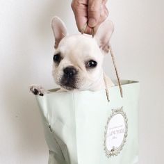 """#cute #puppy #mickeysgirl  """" Believe in yourself!! """""""