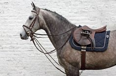 Ook Duitsland bekijkt regels rondom slofteugel | Hoefslag Show Horses, Horseback Riding, My Photos, Rondom, Animals, Instagram, Animales, Animaux, Equestrian