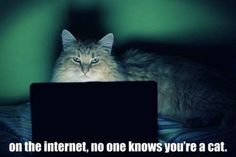 THIS is why there's so many cat photos on the Internet!!,