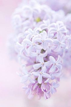Pale and pretty spring flowers