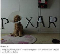Haha brilliant use of the cone of shame.  (Not a Disney World Photo ... but too cute!  Just had to share)!