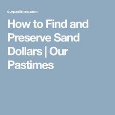 How to Find and Preserve Sand Dollars | Our Pastimes