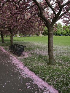Pink snow in Greenwich park London