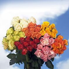 75 Fresh Cut Assorted Color Roses Long Stem | Fresh Flowers Express Delivery | Perfect for Birthdays, Anniversary or any occasion. >>> Click image to review more details.