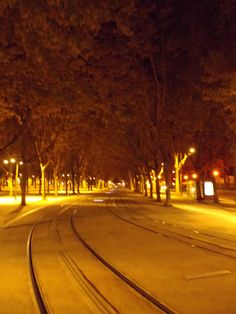 Tram tracks lined by trees.