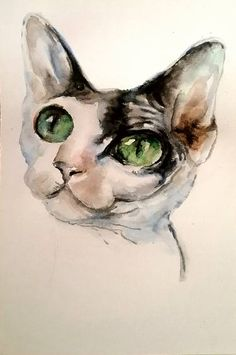 Devon Rex cat's face