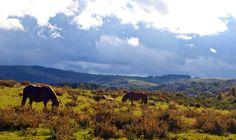 """En la foto, mañana de viento sur (Egoi) en Aurizberri/Espinal (#Navarra, #Nafarroa). Nubes amenazadoras en el norte cubren los altos de Ibañeta. Al sur, los cielos despejados abren paso al sol que ilumina los hermosos paisajes, cuajados de bosquetes de hayas y espinos, de acebos, robles y arces. En sus praderas pastan ovejas latxas, vacas pirenaicas y caballos """"burguete"""" en un remanso de paz que abruma en su belleza. Juan Goñi."""