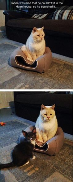 Awww get him a igloo too from Cats In Care