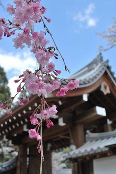 Daigo-ji, Kyoto