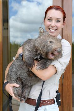 Wombats Have Butts That Are Made Up Of Mostly Cartilage In Order To Prevent Being Bit And Captured When Escaping Predators. They Are Literal Hardasses... - Imgur