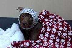 Save Little Bear - Happy Days Rescue by Stephanie Center - GoFundMe