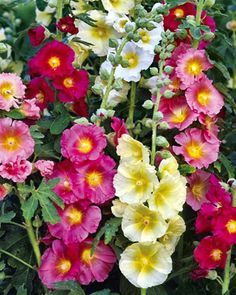 old fashionedflower garden - Google Search