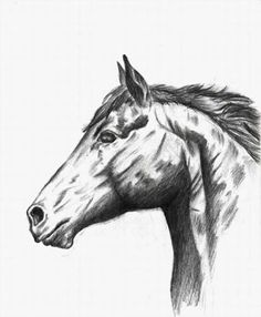 scientific drawing of animal Pencil Drawings Of Animals, Animal Sketches, Horse Head, Horse Art, Drawing Sites, Scientific Drawing, Ship Paintings, Drawing Reference, Rock Art