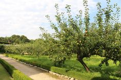 Autumn Garden, Spring Garden, Dramatic Highlights, Fruit Picking, Replant, The Visitors, Early Spring, Cut Flowers, Landscaping