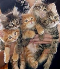 Handful of Kittens. I love the one in the middle!