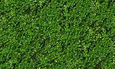 Textures Texture seamless | Green hedge texture seamless 13099 | Textures - NATURE ELEMENTS - VEGETATION - Hedges | Sketchuptexture