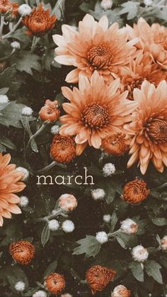 march wallpaper 🌼