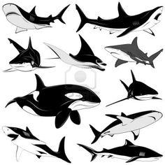 Set of various sharks, tattoo Stock Photo - 9510637