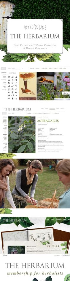 Interested in studying herbs at an affordable price? Use the coupon code GIVETHANKS for a great deal on The Herbarium, a membership website with in-depth studies of herbs crafted by some of the most brilliant minds across the globe.