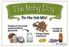 Essential oils for an itchy dog