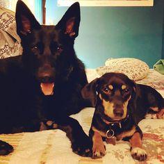 Sair do banho e encontrar quatro olhinhos ansiosos #lovedogs #twodogs
