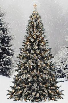 Merry Christmas ❊❊ Joyeux Noël ❊❊ メリークリスマス ❊❊ CLLC ❊❊