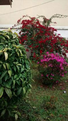 Cores do meu jardim. Foto minha. Agosto/2016.