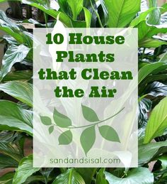 10-House-Plants-that-Clean-the-Air.jpg (620×681)