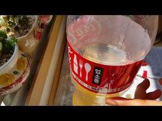 다육이와 화초에게줄 천연☆액비☆(영양제) 계란껍질걸러 희석하기 - YouTube