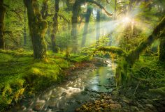 ~ Olympic Rainforest - Washington: Home Wweet Home ~