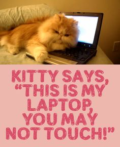 "Kitty Says, ""This Is My Laptop, You May Not Touch!"""