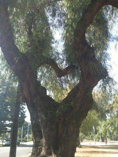 a heart tree! I Love Heart, Happy Heart, Enchanted Tree, Heart In Nature, Guard Your Heart, Heart Tree, Unique Trees, Felt Hearts, Tree Art