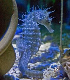 Sea Horse: as an animal totem, can represent patience, protection, chivalry, persistence, mindfulness and generosity.
